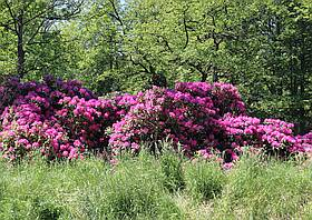 Rhododendronpark Gaußig